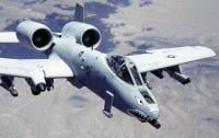 Warthog-Fan Photo