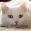 New Game: Whats your favorite? - last post by beezel